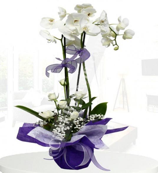 2'li Beyaz Orkide,7 Beyaz Gül ® ORK123