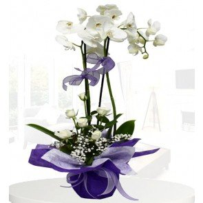 2'li Beyaz Orkide,7 Beyaz Gül