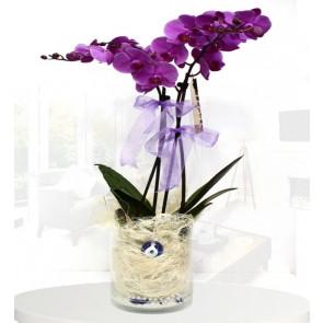 Pembe Orkide Nazar Değmesin